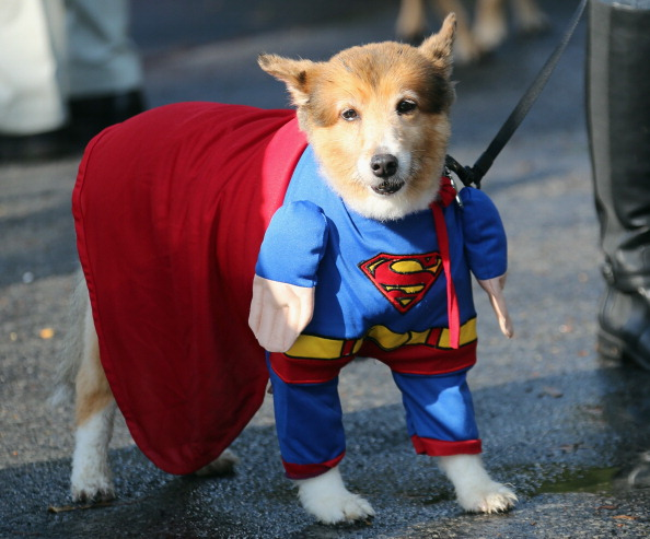 Pet Halloween Contest at Old Westbury Gardens