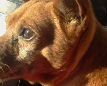 Let's Help Hans the Foster Dog Find a New Home