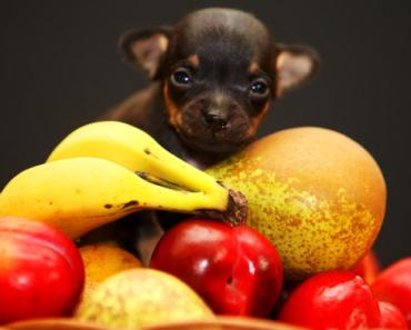 Health Food for your Dogs