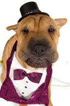 Probably the cutest bow tie we've ever seen on a dog. Seriously, can you argue this?
