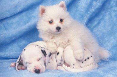 puppies posing