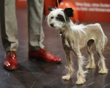 Data Shows This is the Least Popular Dog Breed in the U.S