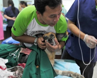 Some Interesting Facts About Rabies