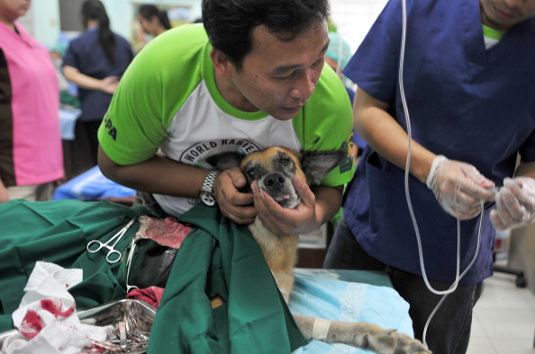 WSPA Perform Mass Dog Vaccinations As Part Of 2013 World Rabies Day