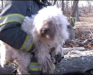 Dog Adopted After Being Rescued From Ledge