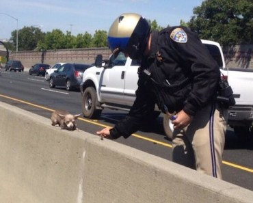 Tiny Dog Rescued From Busy Highway, Thanks To Police