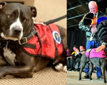 Service Dog Accepts College Degree For Deceased Owner