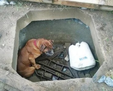 Blind Boxer Dog Rescued After Being Thrown Down Concrete Hole