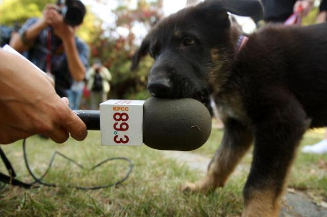 Commercial Dog Cloning Service Duplicates Five Puppies from 9/11 Hero Dog
