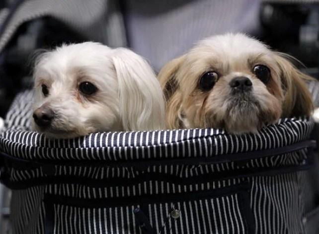 Asian International Dog Show
