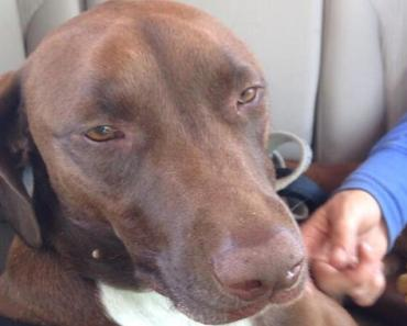 Dog of Missing Firefighter Found One Week after Initial Search