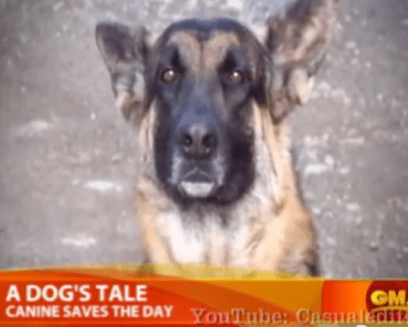 Heroic Dog Leads Cop to Burning Home