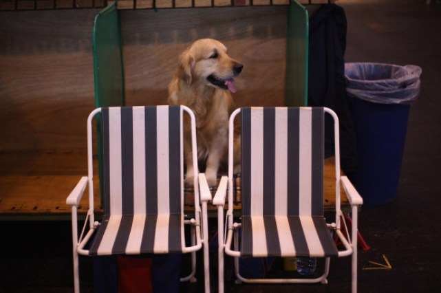 Dogs And Owners Gather For 2011 Crufts Dog Show