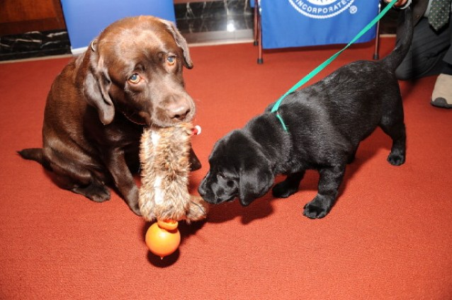 American Kennel Club Announces Most Popular Dogs In The U.S.