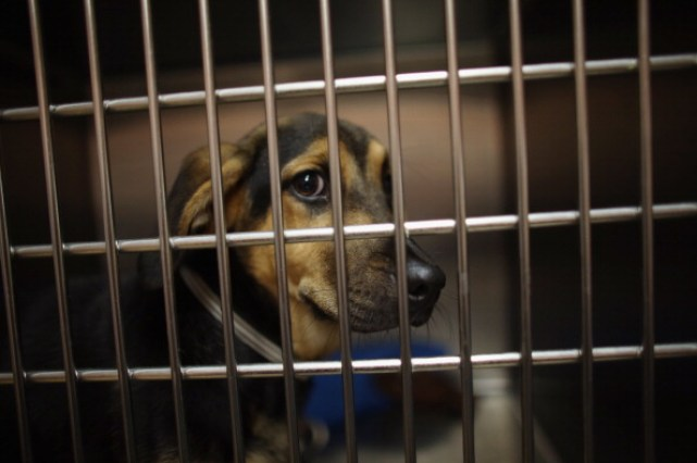 Animal Rescue Group Takes In Cats And Dogs Displaced From Oklahoma Tornadoes