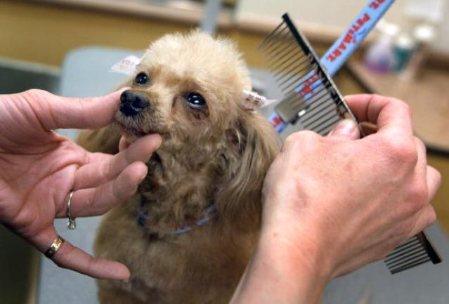 Petsmart Stores Show High Earnings