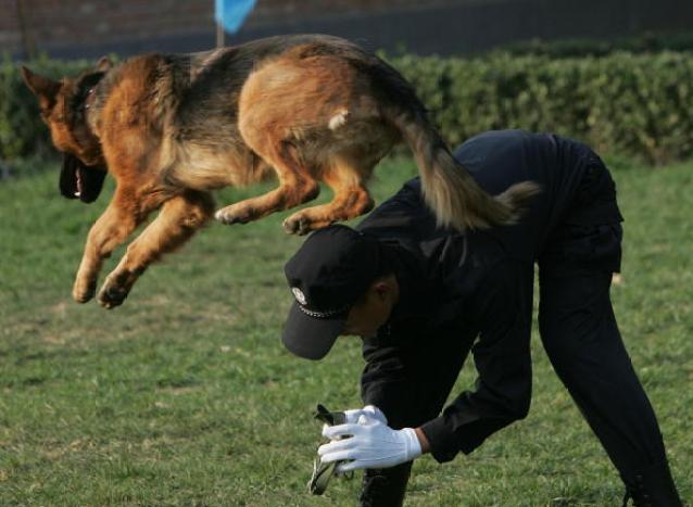 Police Dog Team Prepares For Olympic Security