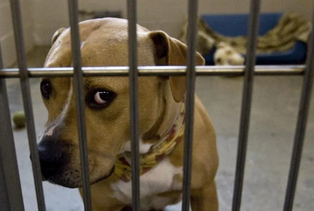 Household Pets Become Latest Victims Of Foreclosure Crisis