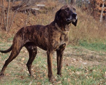 The Ten Best Hunting Dog Breeds