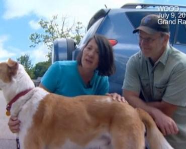 Dog Lost in Michigan Tornado is Found