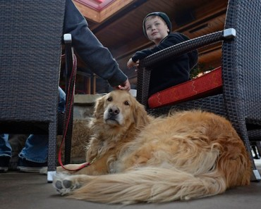 California Law Allows Pets To Dine Outside at Restaurants