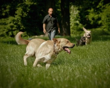 Five Tips to Follow When Exercising Your Dog