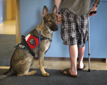 What to Look for in a Therapy Dog