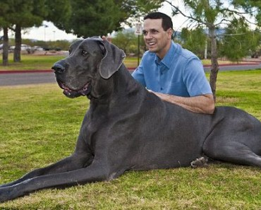 10 Things You Didn't Know about the Blue Great Dane