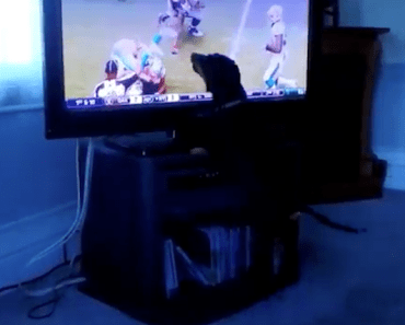 Is This Dog Excited for Football or What?