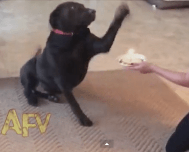 Watch What This Dog Does with his Birthday Cake