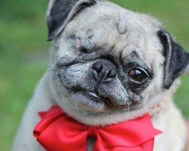 Monkie is a One-Eyed Pug Who Finally Found Her Family
