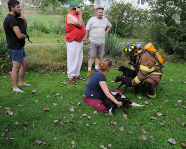 Firefighters Rescue Seven Puppies from a House Fire