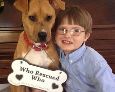 An Abused Pitbull Meets an Autistic Boy and the Unthinkable Happens