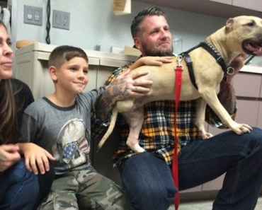 An Abused Pitbull Finds a Loving Home With New Family