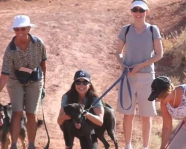 pound-puppy-hike