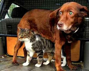 A Blind and Deaf Dog's Best Friend and Guide is a Cat