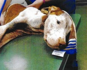 Dog Left for Three Days Without Food is Saved from Horrible Conditions
