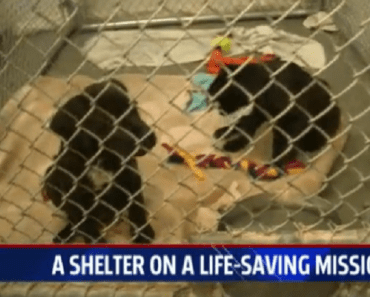 31-dogs-rescued