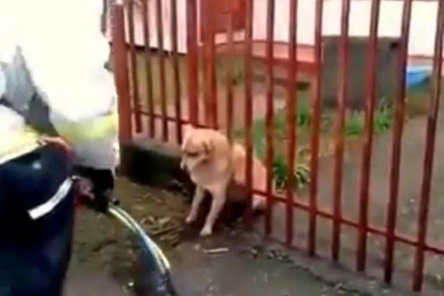 chubby-dog-stuck