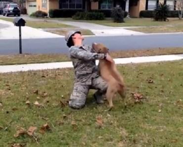 dog0reunion-soldier