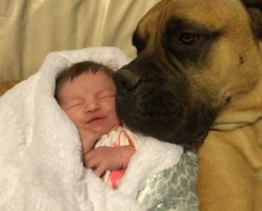 Dog and child 6