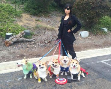 The Avengers Have Been Replaced by Corgis!