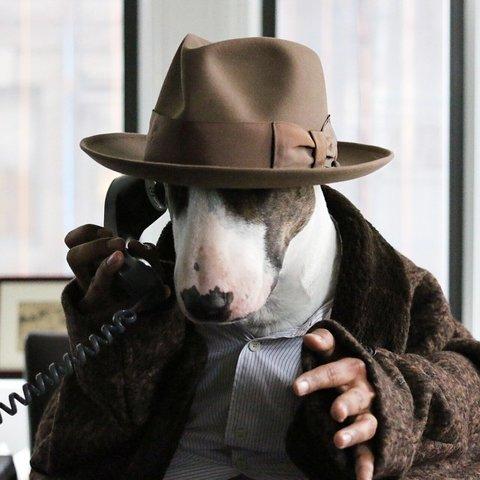 Marc Jacobs dog