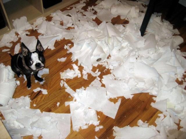paper towel dog