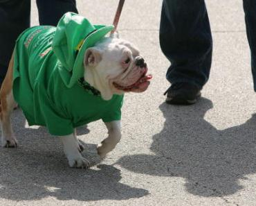 20 Things that Only Bulldog Owners Would Understand