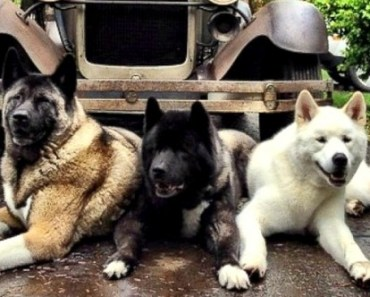 Blinded Rescue Dog's Little Siblings Help to be Her Guides