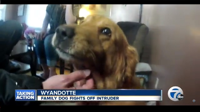 dog saves family