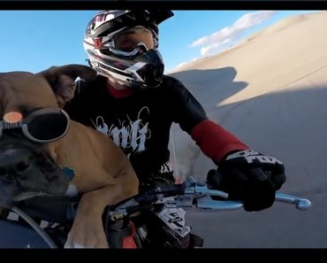 Dog is Having the Time of His life Riding a Dirt Bike