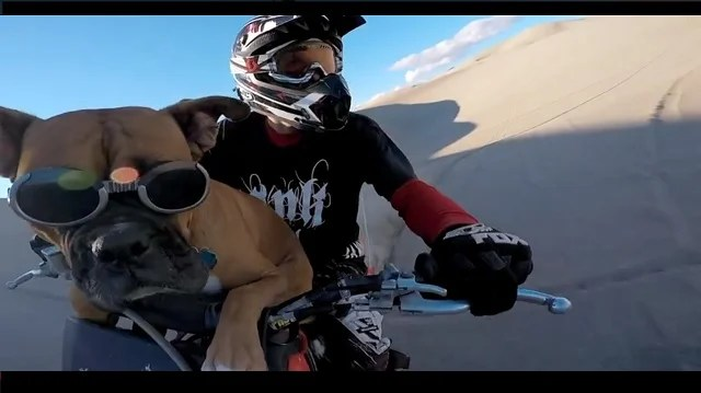 dirt bike dog