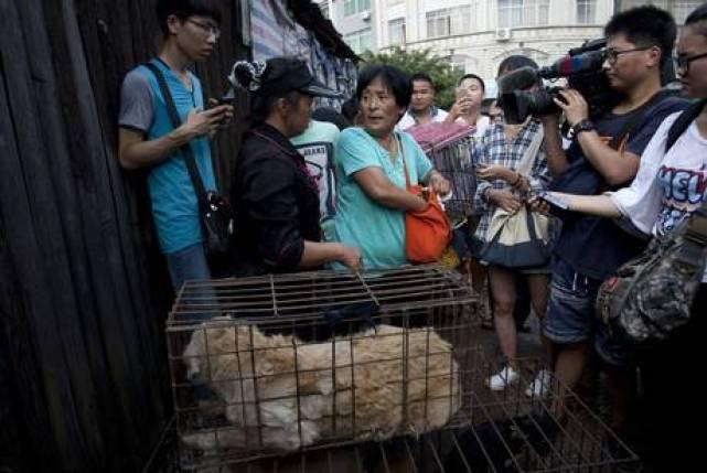 dog market 2